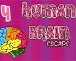 Solucion Human Brain 4 Guia