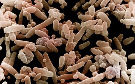 how your gut flora influences your health