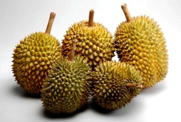 Durian. Kotabumi Lampung Utara