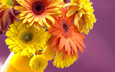 Beautiful Flowers Pictures for desktop