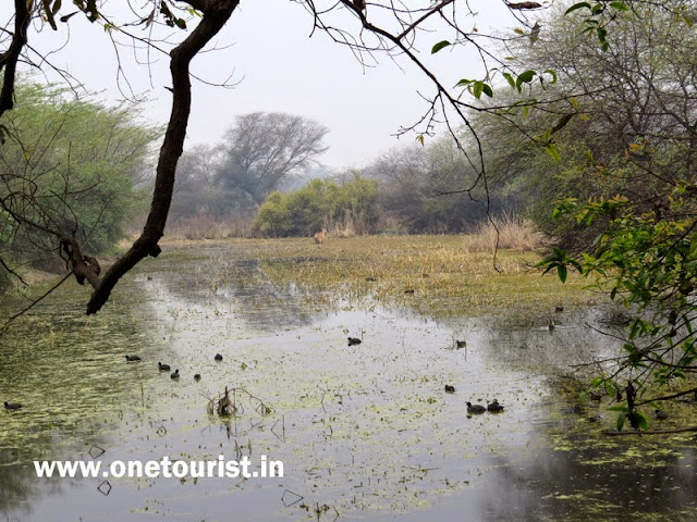 Keoladeo national park , Bharatpur , Rajashthan