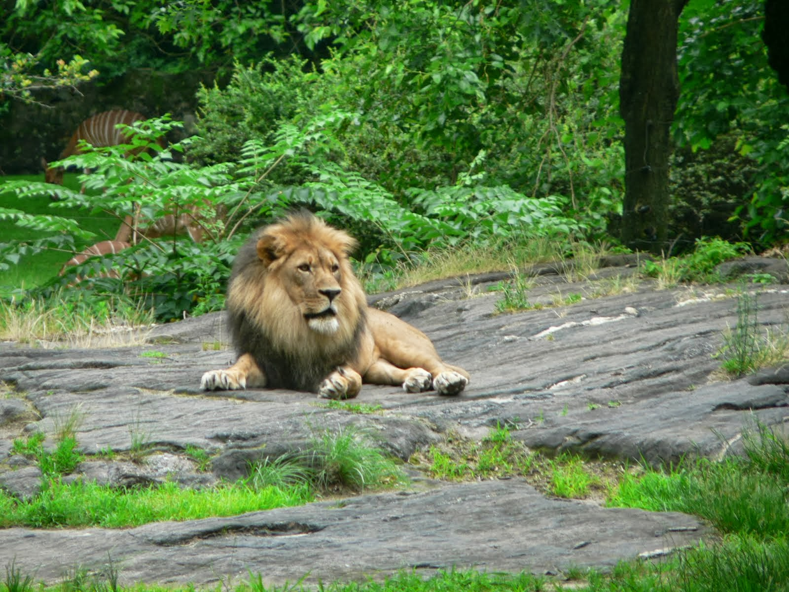 King of the Bronx Zoo