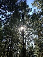 Ann Again and again Black Butte Ranch Ponderosa Pines