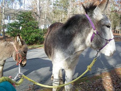 fuzzy small donkey