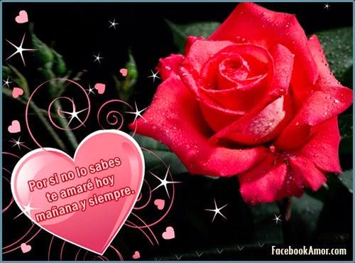imagenes de flores de rosa para facebook amor