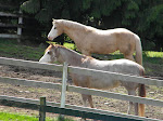 """The Girls"" aka ""The pasture ornaments"" Our two Paint Mares"