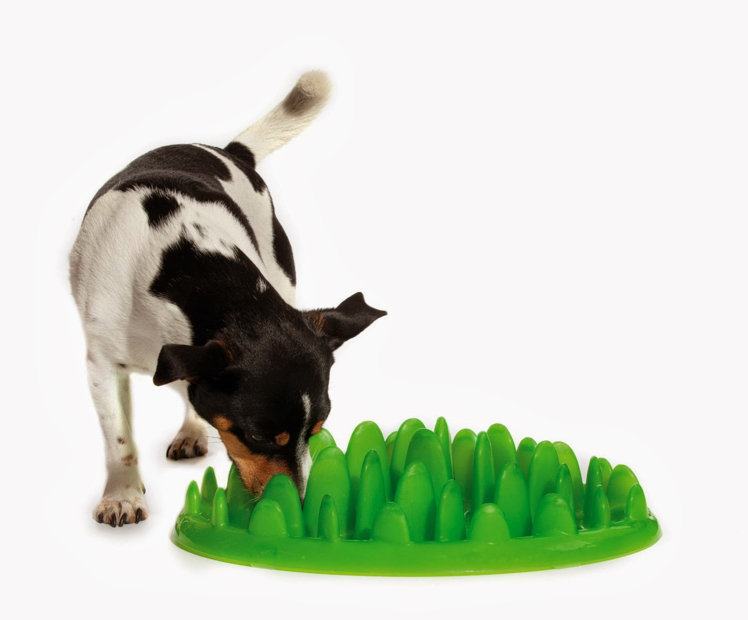 5 tips to make your dog eat slower pawsitively pets Dog will eat out of hand but not bowl