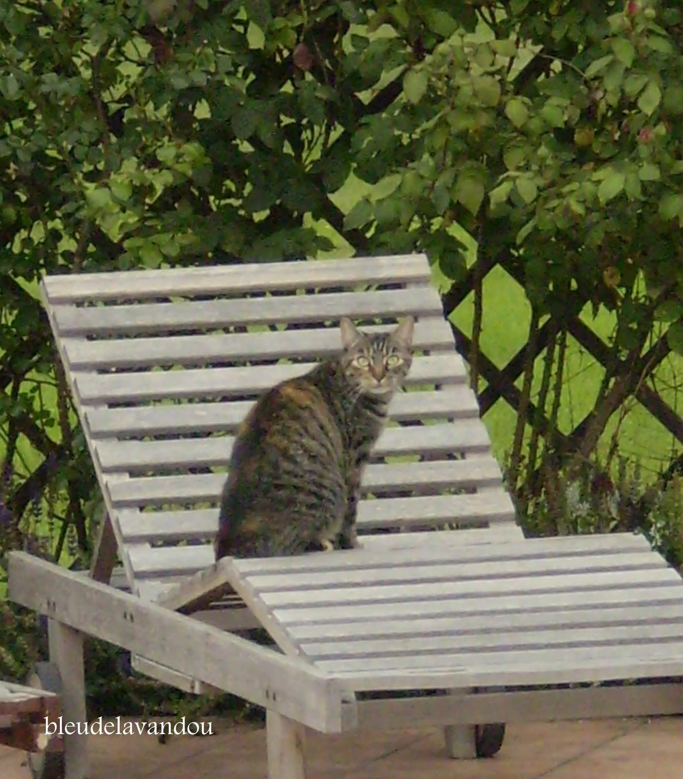 Bleudelavandou: kattekwaad en kattestreken
