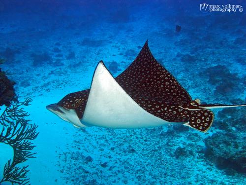 The Shark Tank Radio Show Sharky S Big Cozumel Adventure 2015