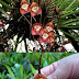 Amazing Monkey Flower Orchid : South American Flowers looks like a monkey