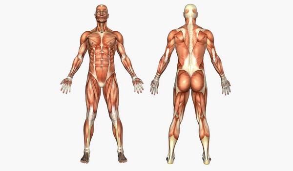 Lo que no sabemos sobre el cuerpo humano