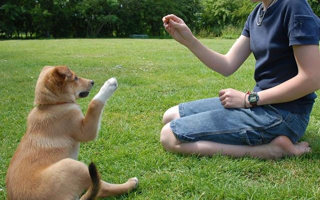 6 alimentos que você nunca deve dar ao seu cachorro
