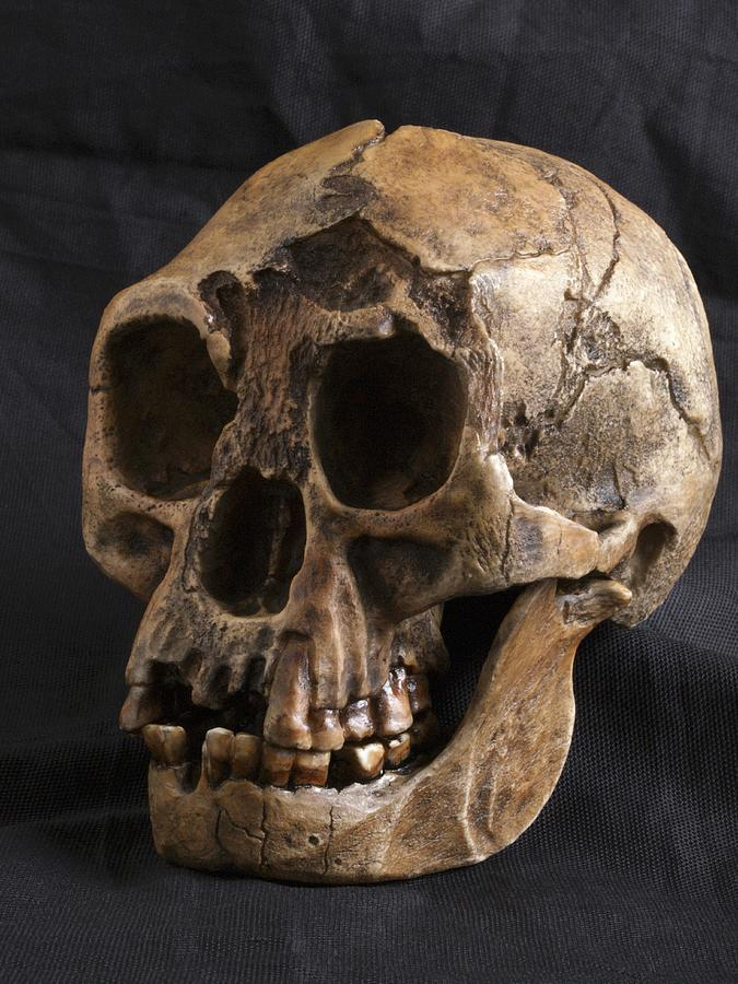 essay on homo floresiensis The homo floresiensis cranium (lb1): size, scaling, and early homo affinities.