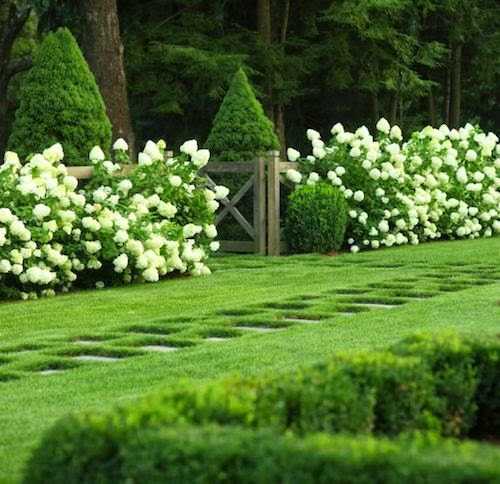 Jenny steffens hobick landscaping and garden design plan - Hydrangea in garden design ...
