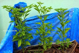 diy plant container