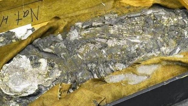 Fosil Manusia 6500 Tahun Diperkirakan Adalah Nuh