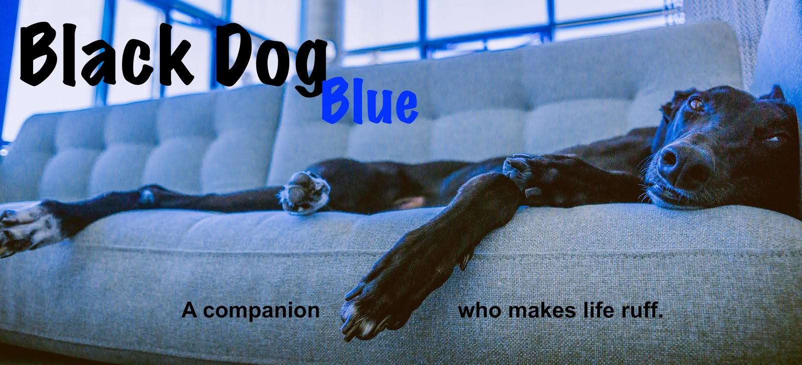 Black Dog Blue
