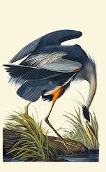 T. Gilbert Pearson Audubon Society