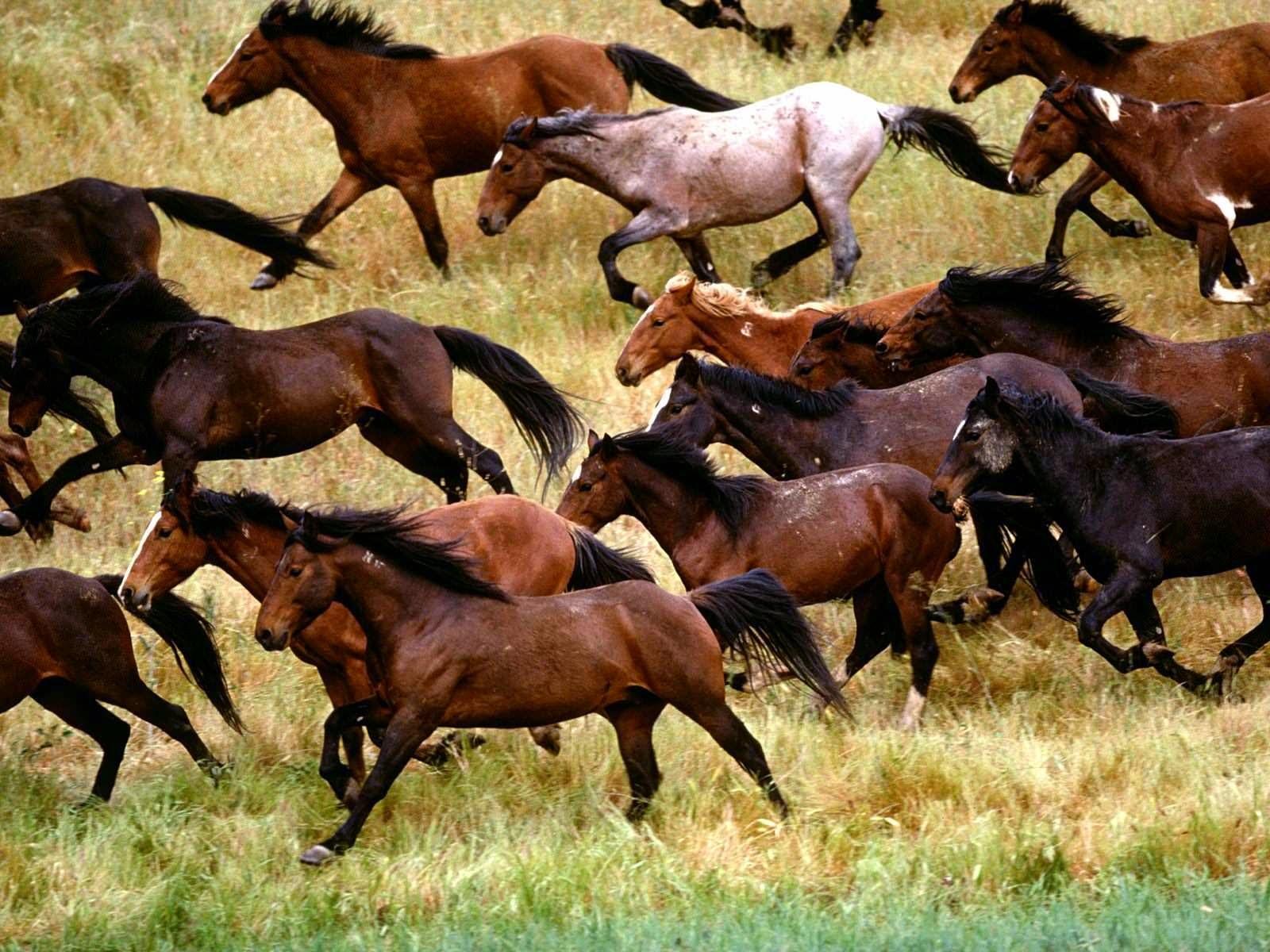 Fantastic   Wallpaper Horse Ultra Hd - wxp%2B(8)  Trends_6610082.jpg