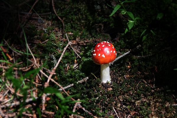 Funghi Perfetti