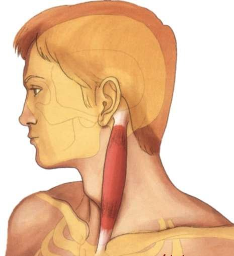 Los dolores de la parte inferior de la espalda a la izquierda