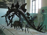 Esqueleto de un Stegosaurus.