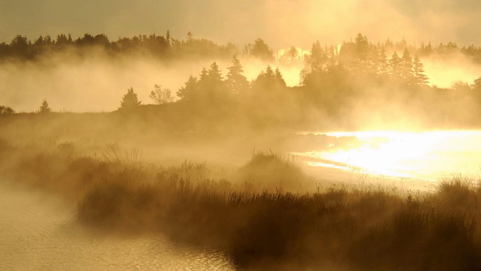 Wallpaper met moeras en mist
