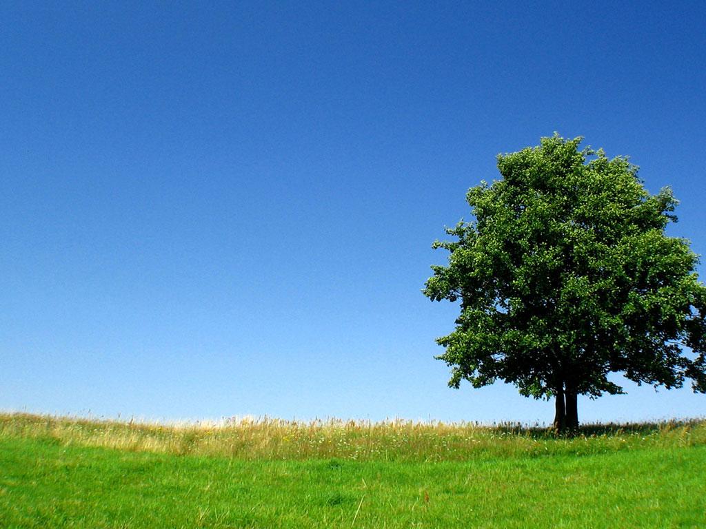 Pohon itu Hijau | Merah Kotak Kotak