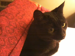Clawdia Cat