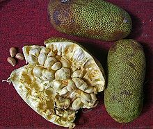 Fruit Cempedak and Benefits