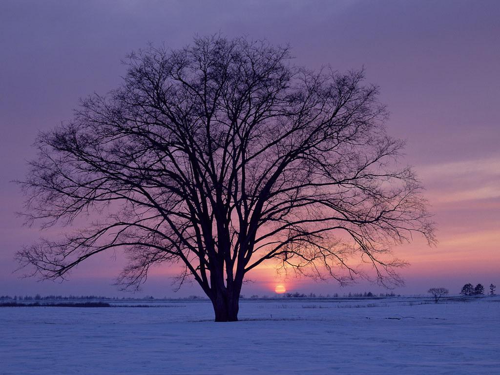 Psych your mind seasonal affective disorder an extreme for Desktop gratis inverno