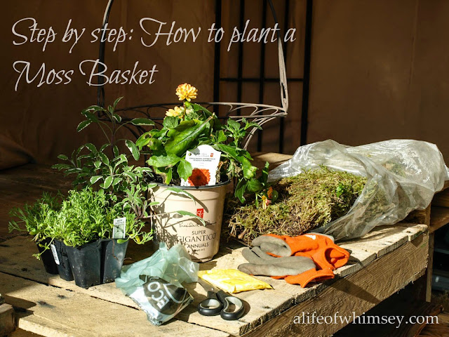 how to plant a moss basket