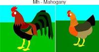 Mh-mahogany.jpg