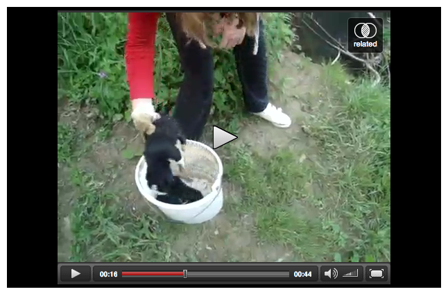 All About Girl Throwing Puppies In River On Video In Bosnia Wont