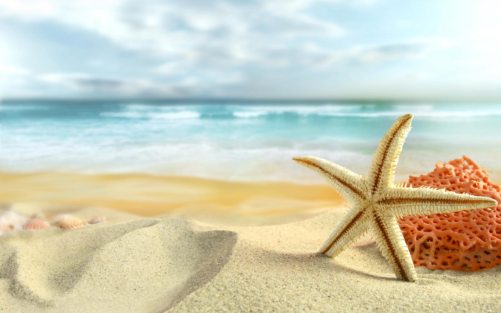 Starfish On The Beach ~ Mystery Wallpaper