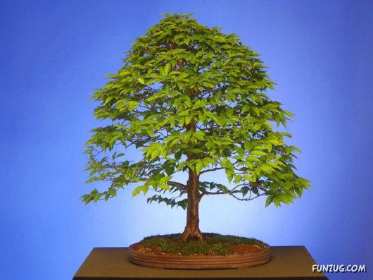 صور عمل فني مذهل: أشجار