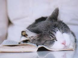 Duerme lo suficiente