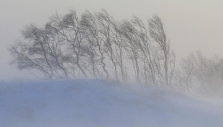 igor shpilenok snow blizzard