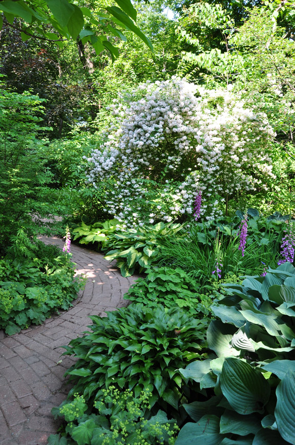 Three Dogs In A Garden Down The Garden Path Part 2