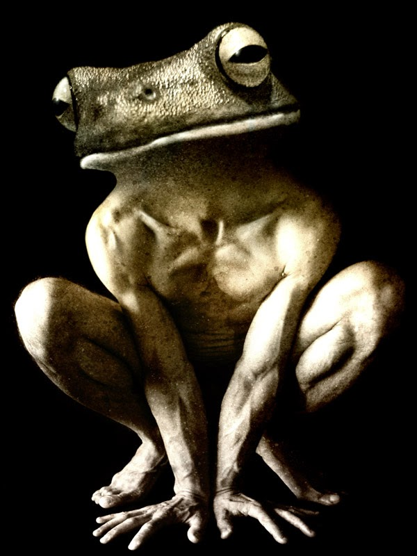 07-Francesco-Sambo-Man-Animal-Hybrids-Mashup-Photography-www-designstack-co
