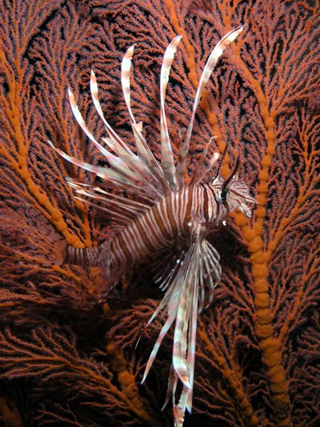 أجمل الأسماك الاستوائية الملونة   - صفحة 4 Colorful-tropical-fishes-30