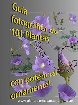 Guía fotográfica de 101 plantas mexicanas con potencial ornamental