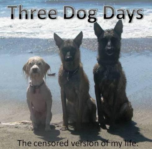 3 Dog Days