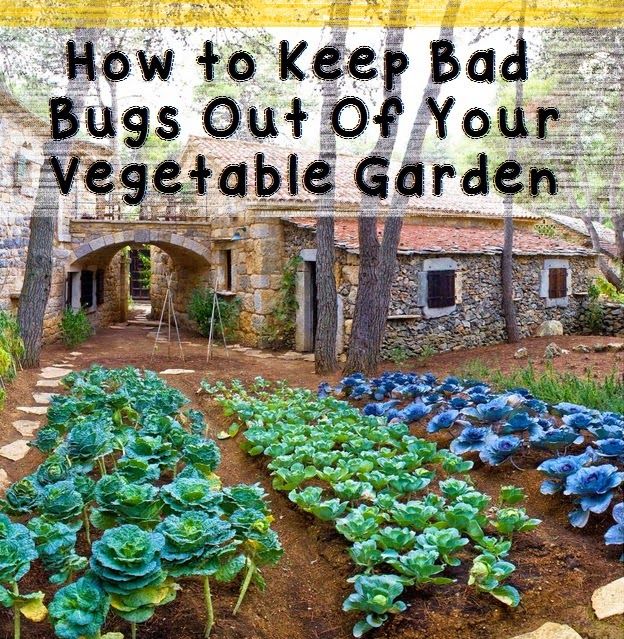 How to Keep Bad Bugs Out Of Your Vegetable Garden #Organic_Gardening