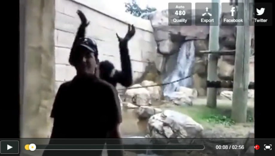 http://funkidos.com/videos-collection/amazing-videos/when-animals-attack-people