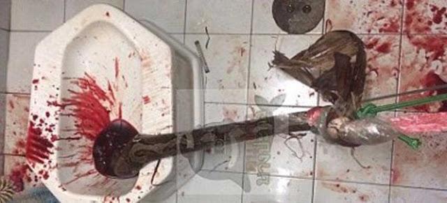 Τρόμος στην τουαλέτα ~ Πύθωνας τού δάγκωσε το… πέος vid