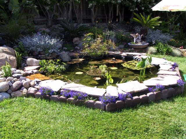 Backyard Raised Pond Ideas : backyard ponds