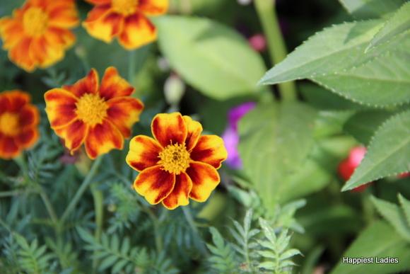 mysore dasara 2015 flower show18