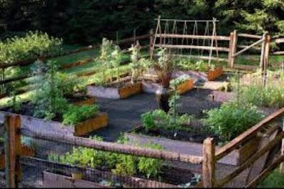 Những vườn rau đẹp thiết kế sân vườn