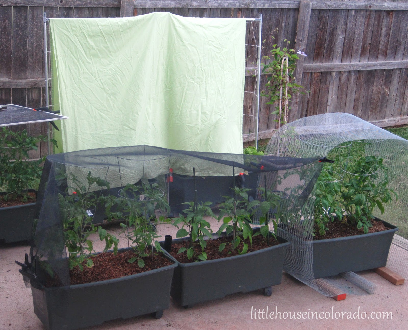 We Had Old Screens Clamped To Tomato Cages, Replacement Window Screening  Draped Over More Tomatoes And Peppers, A Bed Sheet Covering The Cucumbers  And A 10 ...